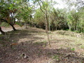 Land for sale in Sosua