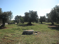 Building plot for sale in Carovigno